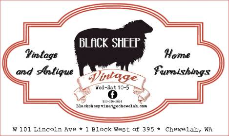black-sheep-2017